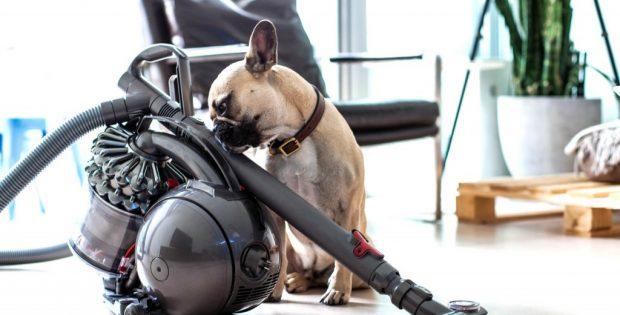 aspirateur animaux test
